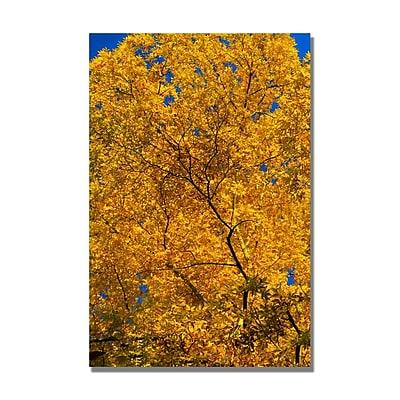 Trademark Fine Art CATeyes 'Golden Trees' Canvas Art 16x24 Inches
