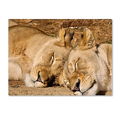 Trademark Fine Art CATeyes 'National Zoo-Lions' Canvas Art 14x19 Inches