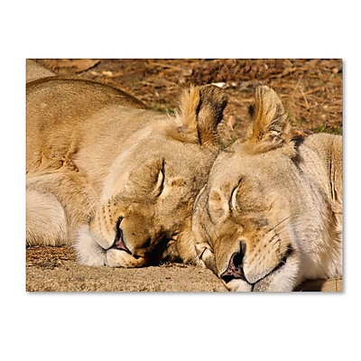 Trademark Fine Art CATeyes 'National Zoo-Lions' Canvas Art 16x24 Inches