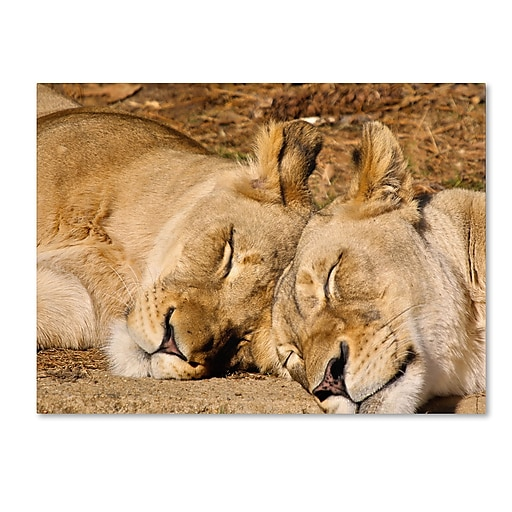 Trademark Fine Art CATeyes 'National Zoo-Lions' Canvas Art 22x32 Inches