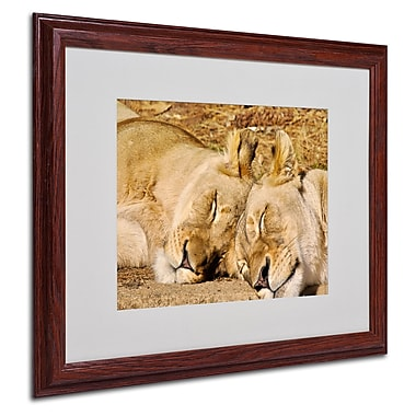 CATeyes 'National Zoo-Lions' Matted Framed Art - 16x20 Inches - Wood Frame