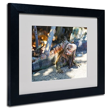 Trademark Fine Art CATeyes 'Virgin Islands 6' Matted Art Black Frame 11x14 Inches
