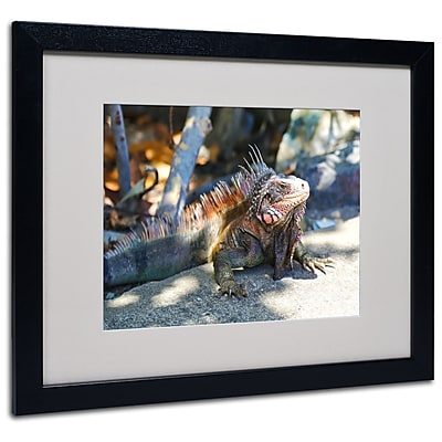 Trademark Fine Art CATeyes 'Virgin Islands 6' Matted Art Black Frame 16x20 Inches