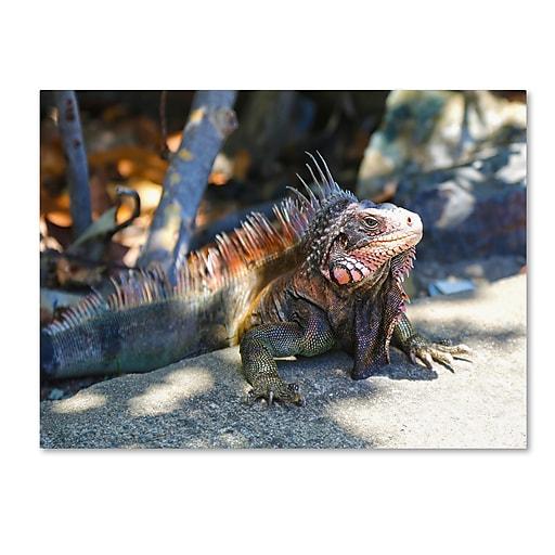 Trademark Fine Art CATeyes 'Virgin Islands 6' Canvas Art 16x24 Inches
