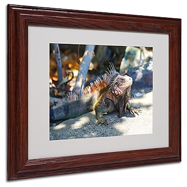 CATeyes 'Virgin Islands 6' Matted Framed Art - 11x14 Inches - Wood Frame
