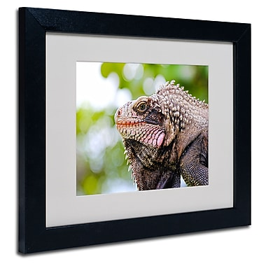 Trademark Fine Art CATeyes 'Virgin Islands 9' Matted Art Black Frame 16x20 Inches