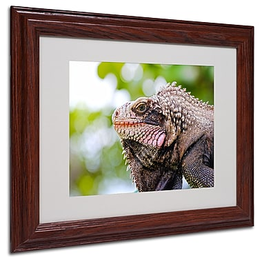 CATeyes 'Virgin Islands 9' Matted Framed Art - 16x20 Inches - Wood Frame