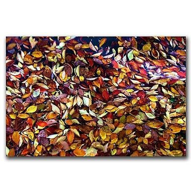 Trademark Fine Art CATeyes 'Lessons' Canvas Art Ready to Hang 35x47 Inches
