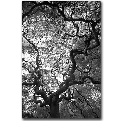 Trademark Fine Art Speaking by CATeyes Canvas Art Ready to Hang 22x32 Inches