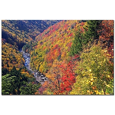 Trademark Fine Art CATeyes 'Autumn's Fire' Canvas Art 30x47 Inches