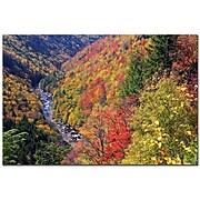 Trademark Fine Art CATeyes 'Autumn's Fire' Canvas Art 16x24 Inches
