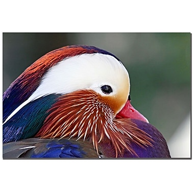 Trademark Fine Art CATeyes 'Keep Your Feathers Well Oiled' Canvas Art 22x32 Inches