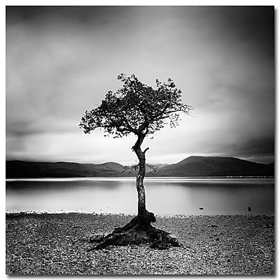 Trademark Fine Art Nina Papiorek 'Scotland, Millarroch Tree' Canvas Art