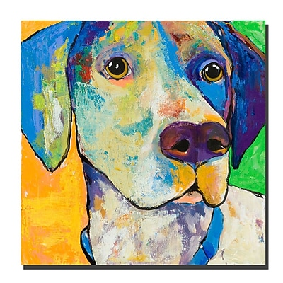 Trademark Fine Art Yancy by Colorful Attitudes-Ready to Hang Canvas! 35x35 Inches