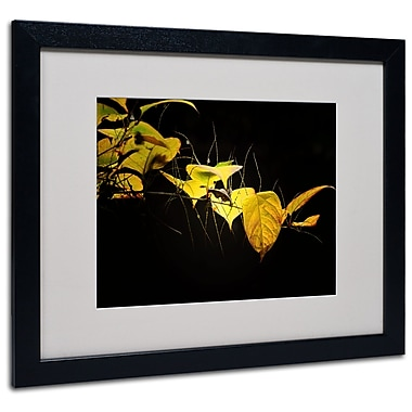 Trademark Fine Art Philippe Sainte-Laudy 'Golding' Matted Art Black Frame 16x20 Inches