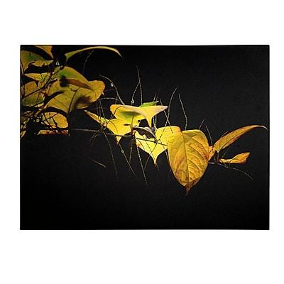 Trademark Fine Art Philippe Sainte-Laudy 'Golding' Canvas Art 16x24 Inches