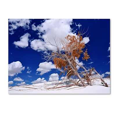 Trademark Fine Art Philippe Sainte-Laudy 'Burn Tree' Canvas Art 30x47 Inches