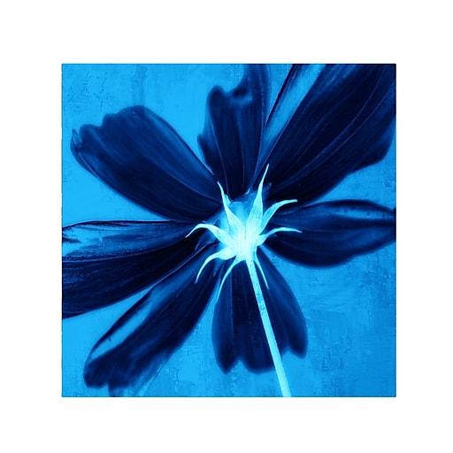 Trademark Fine Art Philippe Sainte-Laudy 'Corolla Blue' Canvas Art 35x35 Inches