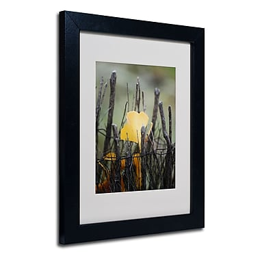 Trademark Fine Art Philippe Sainte-Laudy 'Prisoner Fall' Matted Art Black Frame 11x14 Inches