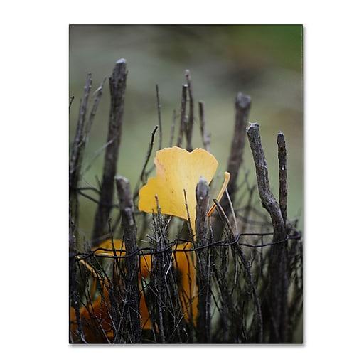 Trademark Fine Art Philippe Sainte-Laudy 'Prisoner Fall' Canvas Art 22x32 Inches