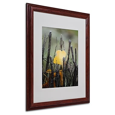 Philippe Sainte-Laudy 'Prisoner Fall' Matted Framed Art - 16x20 Inches - Wood Frame