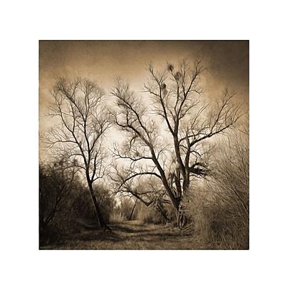 Trademark Fine Art Philippe Sainte-Laudy 'Sepia Ghost' Canvas Art 35x35 Inches