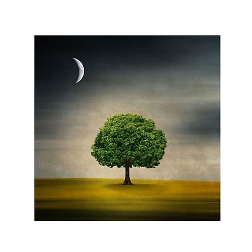 Trademark Fine Art Philippe Sainte-Laudy 'Under the Moon' Canvas Art 18x18 Inches