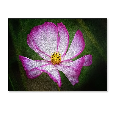Trademark Fine Art Philippe Sainte-Laudy 'Valentine's Day' Canvas Art 14x19 Inches