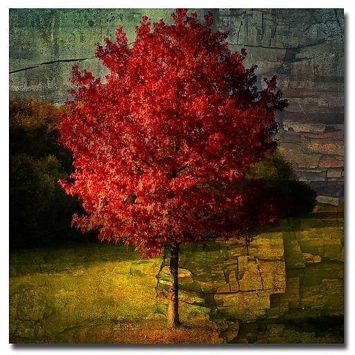 Trademark Fine Art Philippe Sainte Laudy 'Autumn Red' Canvas Art 18x18 Inches