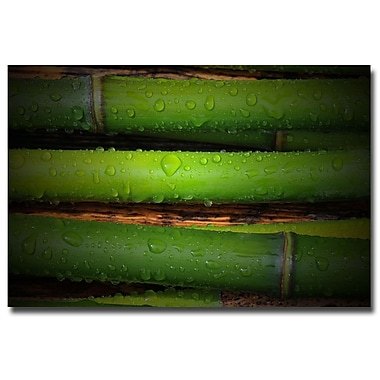 Trademark Fine Art Philippe Sainte Laudy 'Bamboo Drops' Canvas Art 22x32 Inches