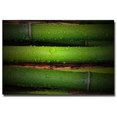 Trademark Fine Art Philippe Sainte Laudy 'Bamboo Drops' Canvas Art 22x32 Inches
