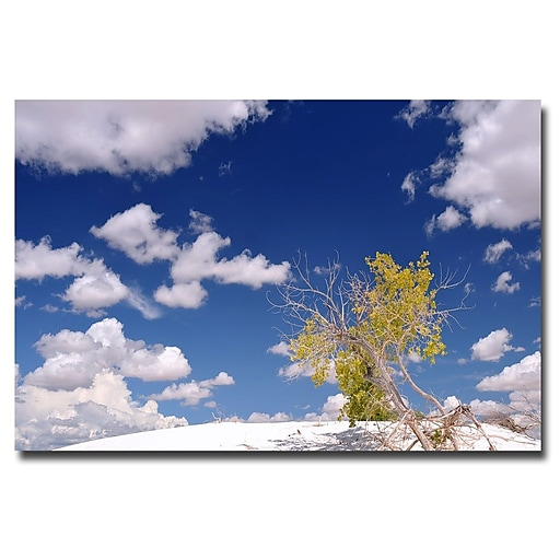 Trademark Fine Art Philippe Sainte Laudy 'Clouds and Loneliness' Canvas Art 16x24 Inches