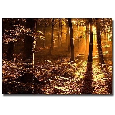Trademark Fine Art Philippe Sainte Laudy 'Morning Light' Canvas Art 16x24 Inches
