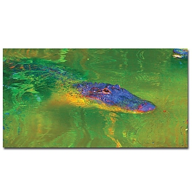 Trademark Fine Art Gator II by Patty Tuggle Ready To Hang Canvas 12 x 24