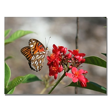 Trademark Fine Art Patty Tuggle 'Butterfly on Red Flowers' Canvas Art 35x47 Inches