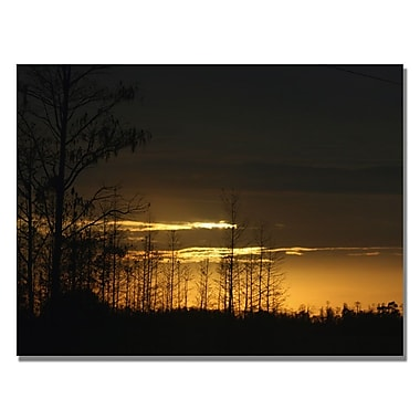 Trademark Fine Art Patty Tuggle 'Trees at Dusk' Canvas Art 35x47 Inches