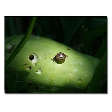Trademark Fine Art Snail Paradise by Patty Tuggle-Ready To Hang Art