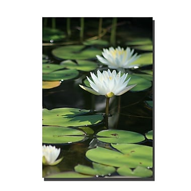 Trademark Fine Art Lovely Lillies by Patty Tuggle Ready To Hang Art