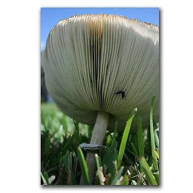 Trademark Fine Art mushroom by Patty Tuggle Gallery Wrapped Canvas Art
