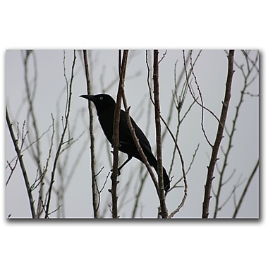 Trademark Fine Art Raven by Patty Tuggle-Ready to Hang