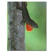 Trademark Fine Art Lizard Dulap by Patty Tuggle-20x24 Canvas Ready to Hang
