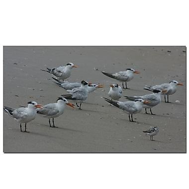 Trademark Fine Art Sea Gull Chatter by Patty Tuggle Canvas Art
