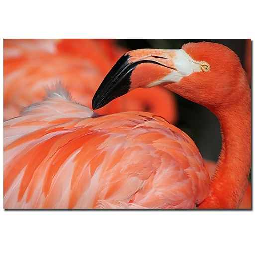 Trademark Fine Art Patty Tuggle 'Pink Flamingo' Canvas Art