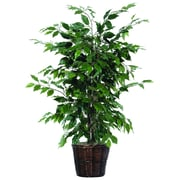 Vickerman 4' Artificial Ficus Bush In Decorative Rattan Basket With Dark Green Leaves