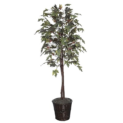Vickerman 6' Frosted Maple Tree With Natural Hardwood Trunks