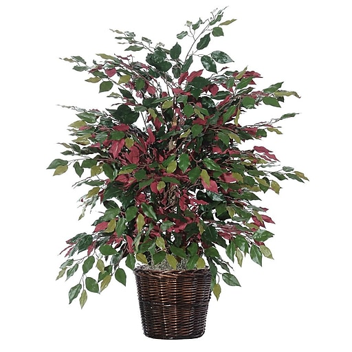 Vickerman 4' Capensia Extra Full Bush On Dragonwood Trunks With Rattan Container, Green/Red