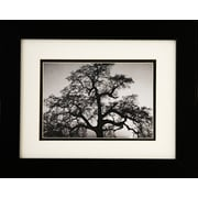 "Diamond Decor Ansel Adams ""Oak Tree Sunset"" Framed Print Art, 10"" x 12"""