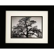 "Diamond Decor Ansel Adams ""Oak Tree Sunset"" Framed Print Art, 10"" x 12"""