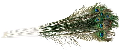 Zucker Peacock Eye Feathers, Natural, 12/Pack
