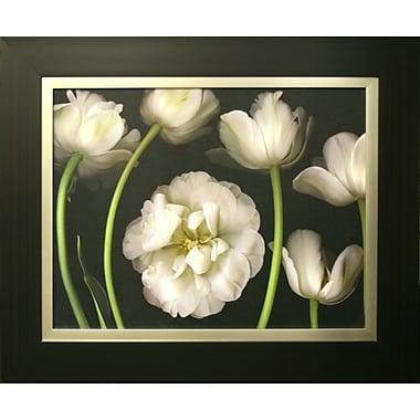 Tulip Garden Framed by Pip Bloomfield